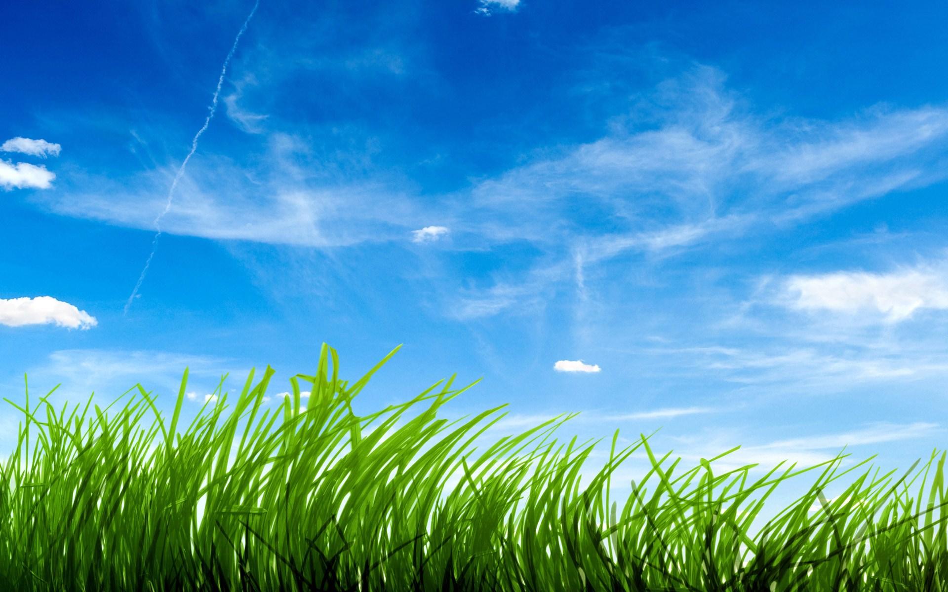 blue sky green grass wallpaper [1920x1200]