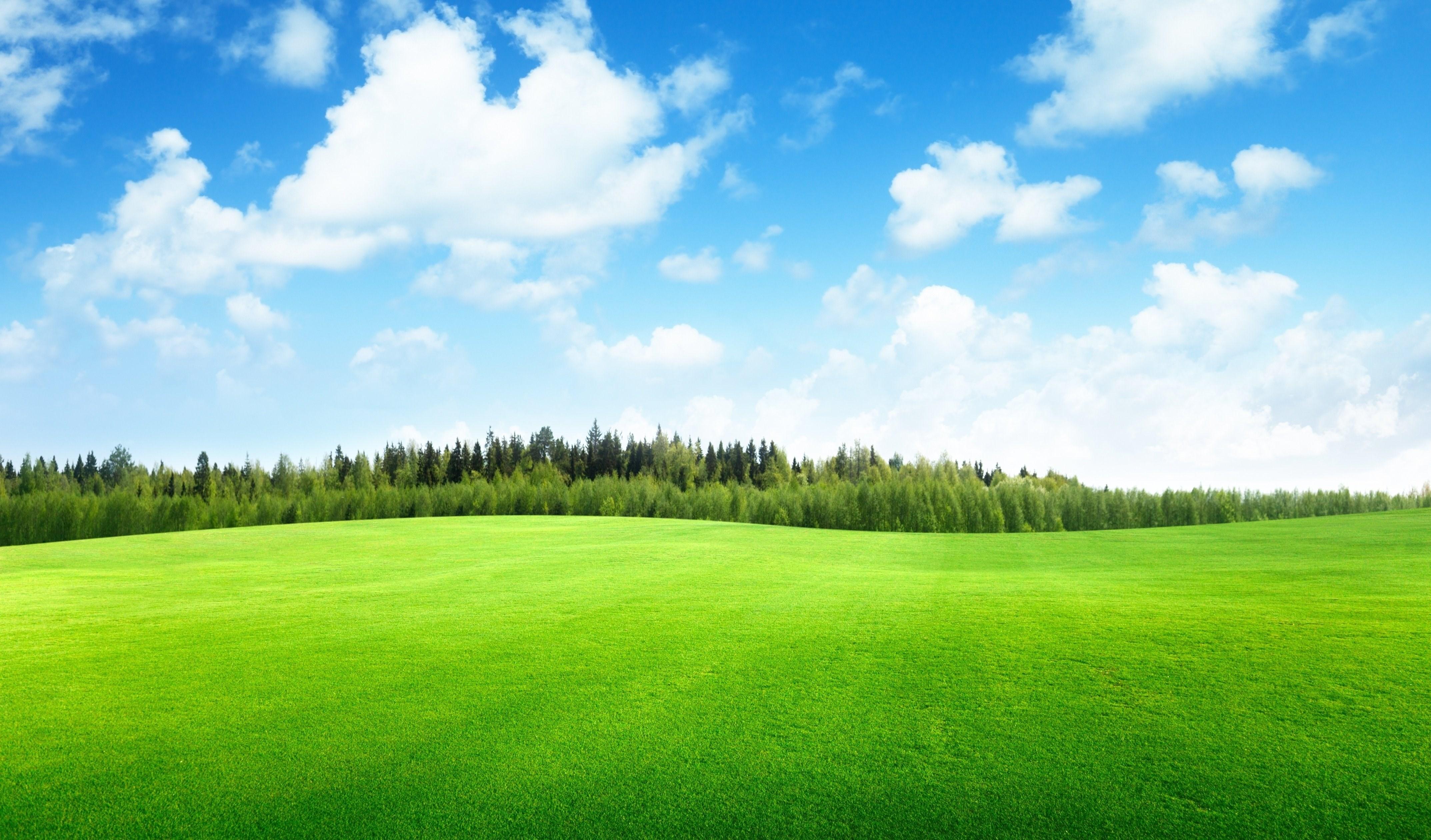 природа небо облака деревья поле nature the sky clouds trees field  № 243732 без смс