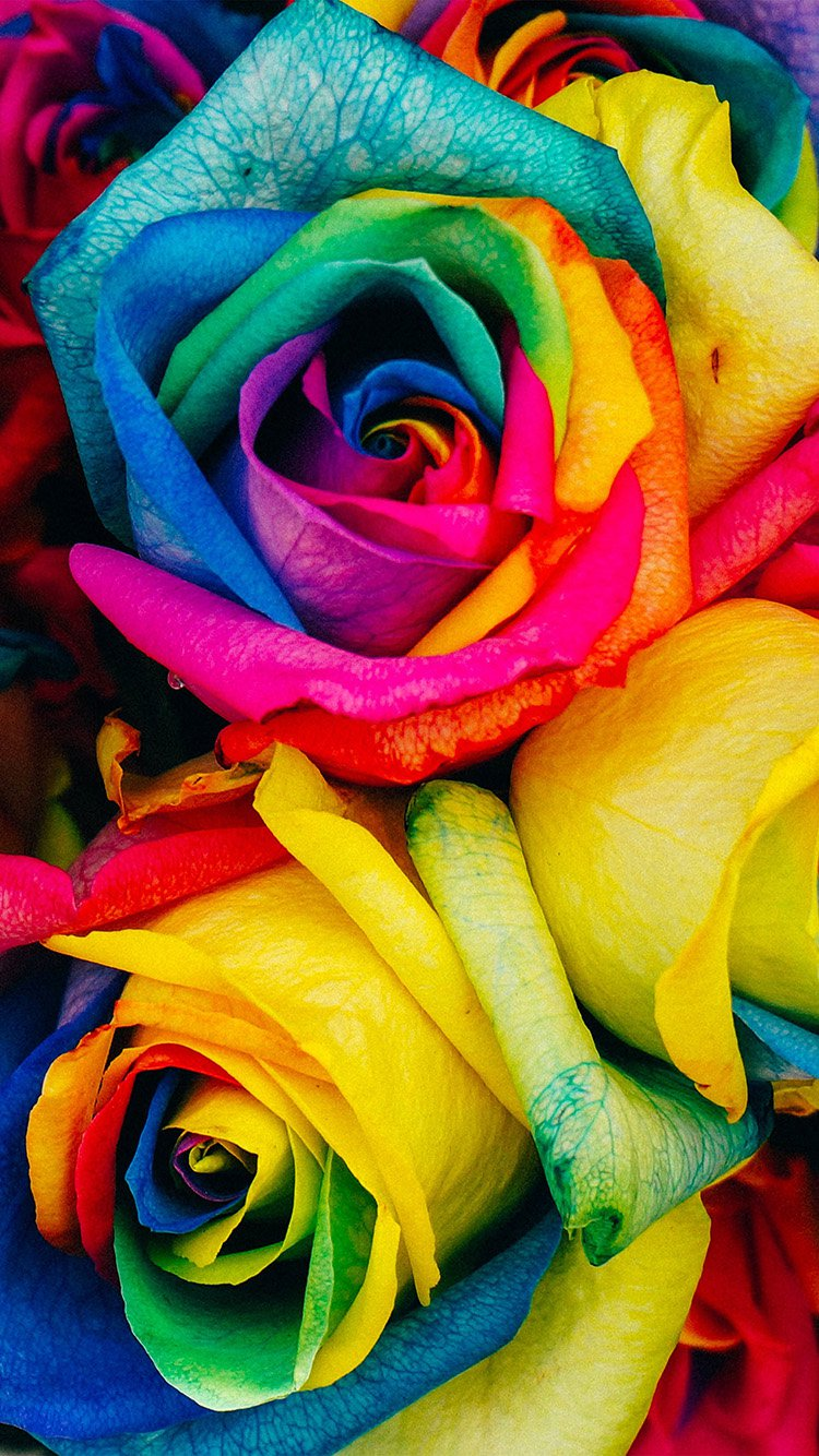 Colorful Flowers iPhone 7 Wallpaper