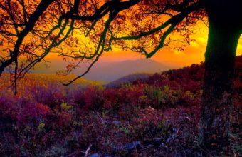 Colors Of Nature Wallpaper 1920x1200 340x220