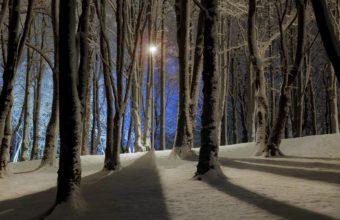 Crisp Winter Forest At Night Wallpaper 1920x1200 340x220