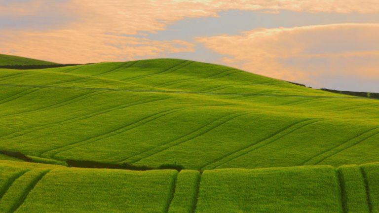 Field Beautiful Distance Wallpaper 1920x1080 768x432