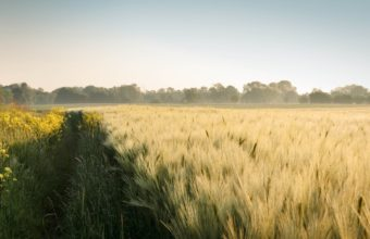 Field Summer Landscape Wallpaper 2048x1152 340x220
