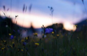 Field Yellow Blue Flowers Macro Wallpaper 2048x1196 340x220