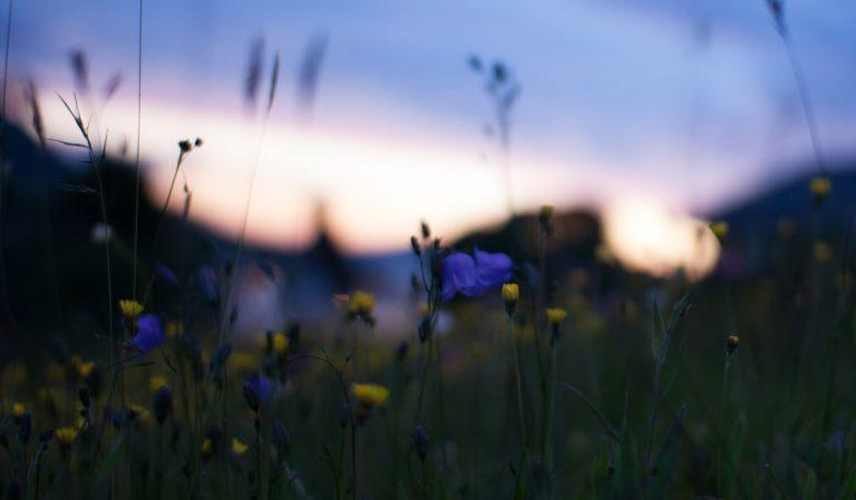 Field Yellow Blue Flowers Macro Wallpaper 2048x1196 768x449