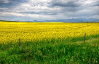 Fields Calgary Grass Yellow Fence Wallpaper 2628x1742 340x220
