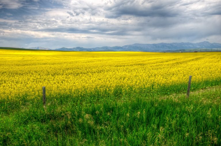 Fields Calgary Grass Yellow Fence Wallpaper 2628x1742 768x509