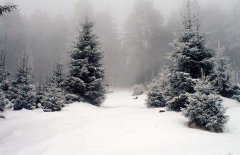 Fir Tree Snow Winter Wallpaper 1350x900 340x220