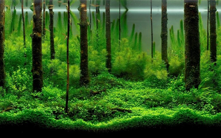 Fish Tank Trees Wallpaper 1920x1200 768x480