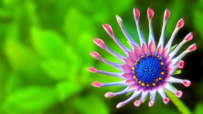 Flower 4K Wallpaper 3840x2160 768x432