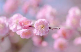 Flower Spring Plant Wallpaper 2560x1600 340x220