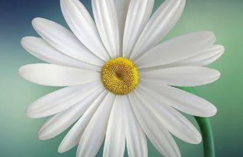 Flower iPhone 7 Wallpaper 340x220