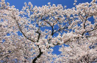 Flowering Spring Sky Wallpaper 1920x1180 340x220