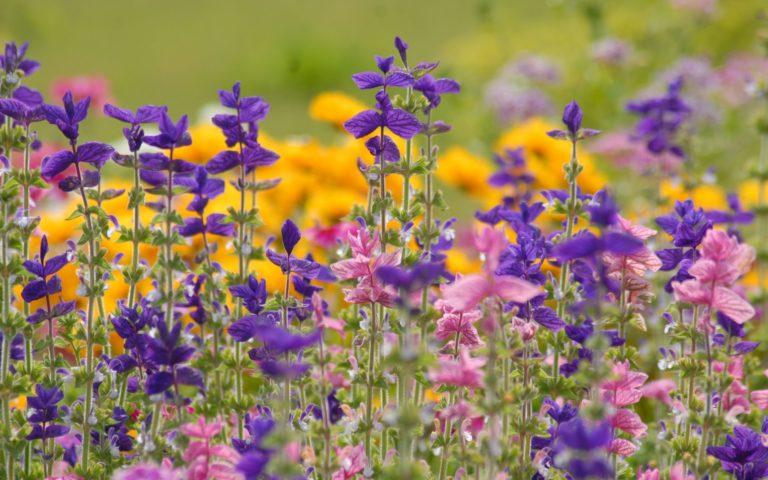 Flowers Meadow Summer Wallpaper 2560x1600 768x480