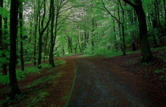 Forest Park Trees Road Landscape Wallpaper 2560x1600 340x220