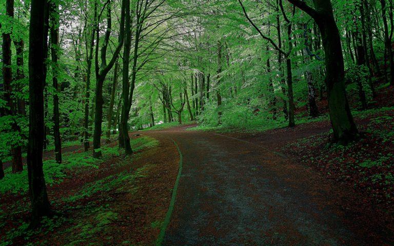 Forest Park Trees Road Landscape Wallpaper 2560x1600 768x480