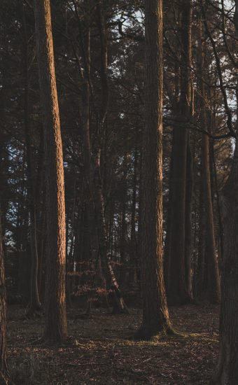Forest Phone Wallpaper 014 340x550