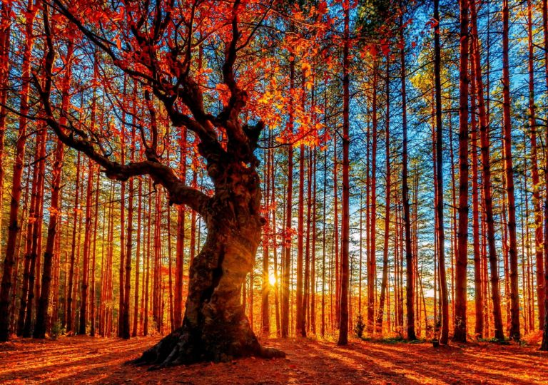 Forest Sky Trees Autumn Foliage Wallpaper 2500x1757 768x540