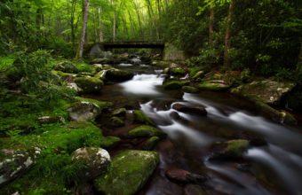Forest Trees Green Stream Bridge Wallpaper 1920x1200 340x220