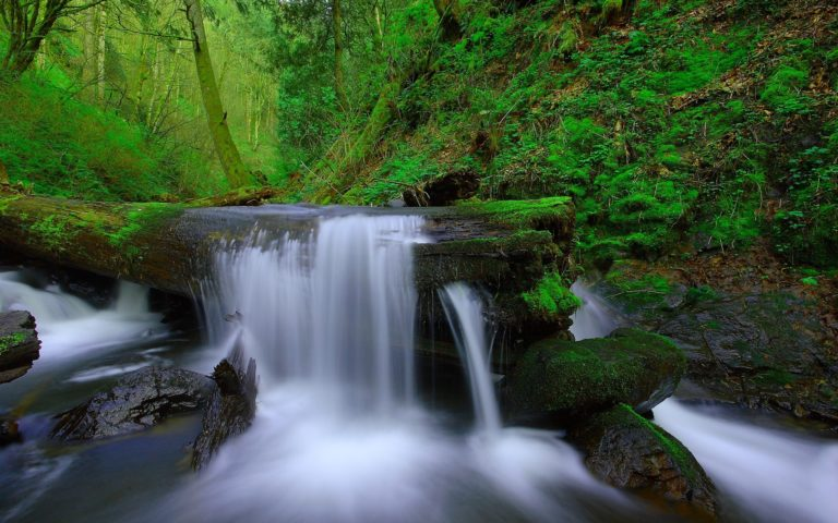 Forest Trees River Stream Waterfall Wallpaper 768x480