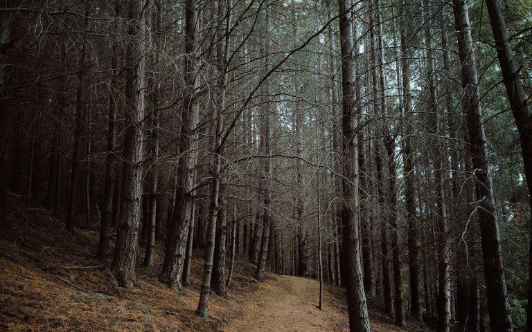 Forest Wallpaper 06 1920x1200 768x480
