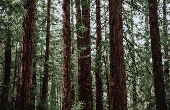 Forest Wallpaper 07 1920x1200 340x220