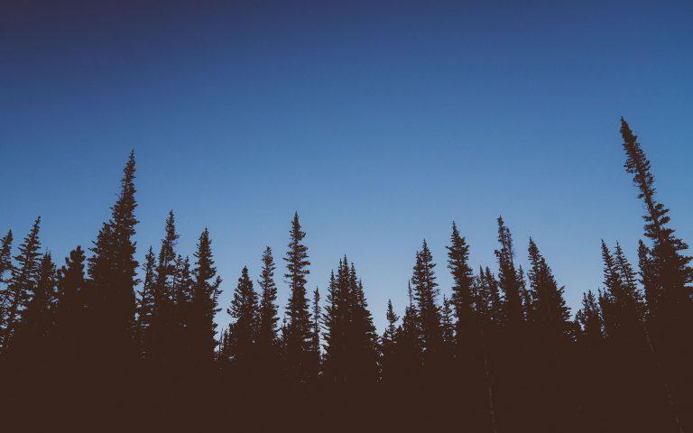 Forest Wallpaper 37 1920x1200 768x480