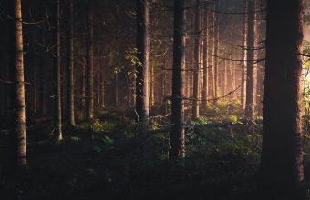 Forest Wallpaper 40 1920x1200 340x220
