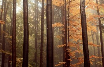 Forest Wallpaper 44 1920x1200 340x220