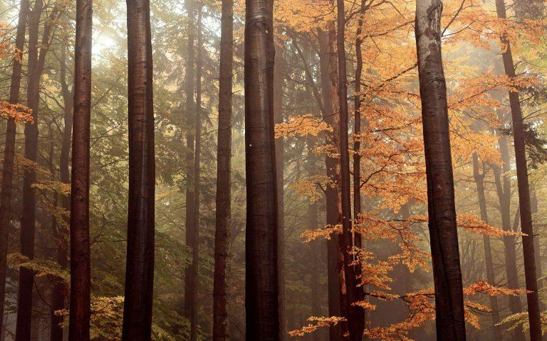 Forest Wallpaper 44 1920x1200 768x480