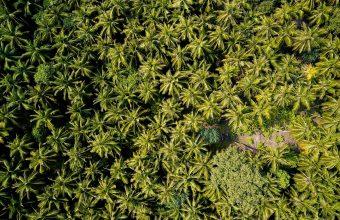 Forest Wallpaper 45 1920x1200 340x220