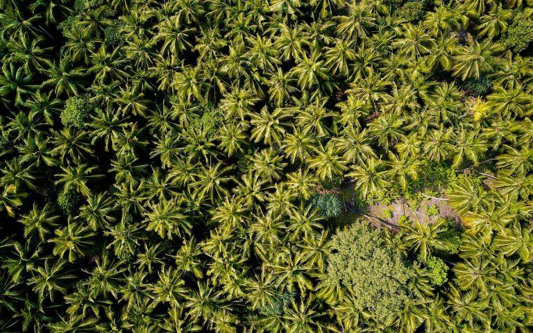 Forest Wallpaper 45 1920x1200 768x480