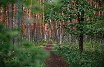 Forest Wallpaper 51 1920x1200 340x220