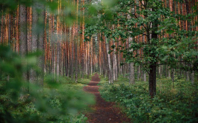Forest Wallpaper 51 1920x1200 768x480