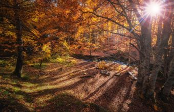 Forest Wallpaper 53 1920x1200 340x220