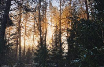 Forest Wallpaper 54 1920x1200 340x220