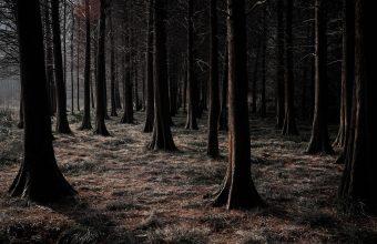 Forest Wallpaper 55 1920x1200 340x220