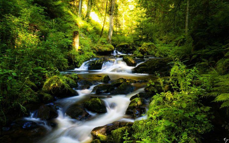 Forest Waterfall Rocks Trees Rivers Wallpaper 768x480