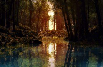 Forrest Pond Wallpaper 2560x1600 340x220