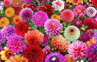 Garden Flowers iPhone 7 Wallpaper 750x1334 340x220