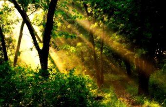 Golden Sun Beams Wallpaper 1920x1200 340x220