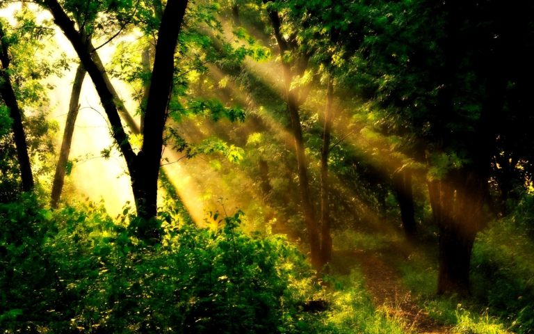 Golden Sun Beams Wallpaper 1920x1200 768x480