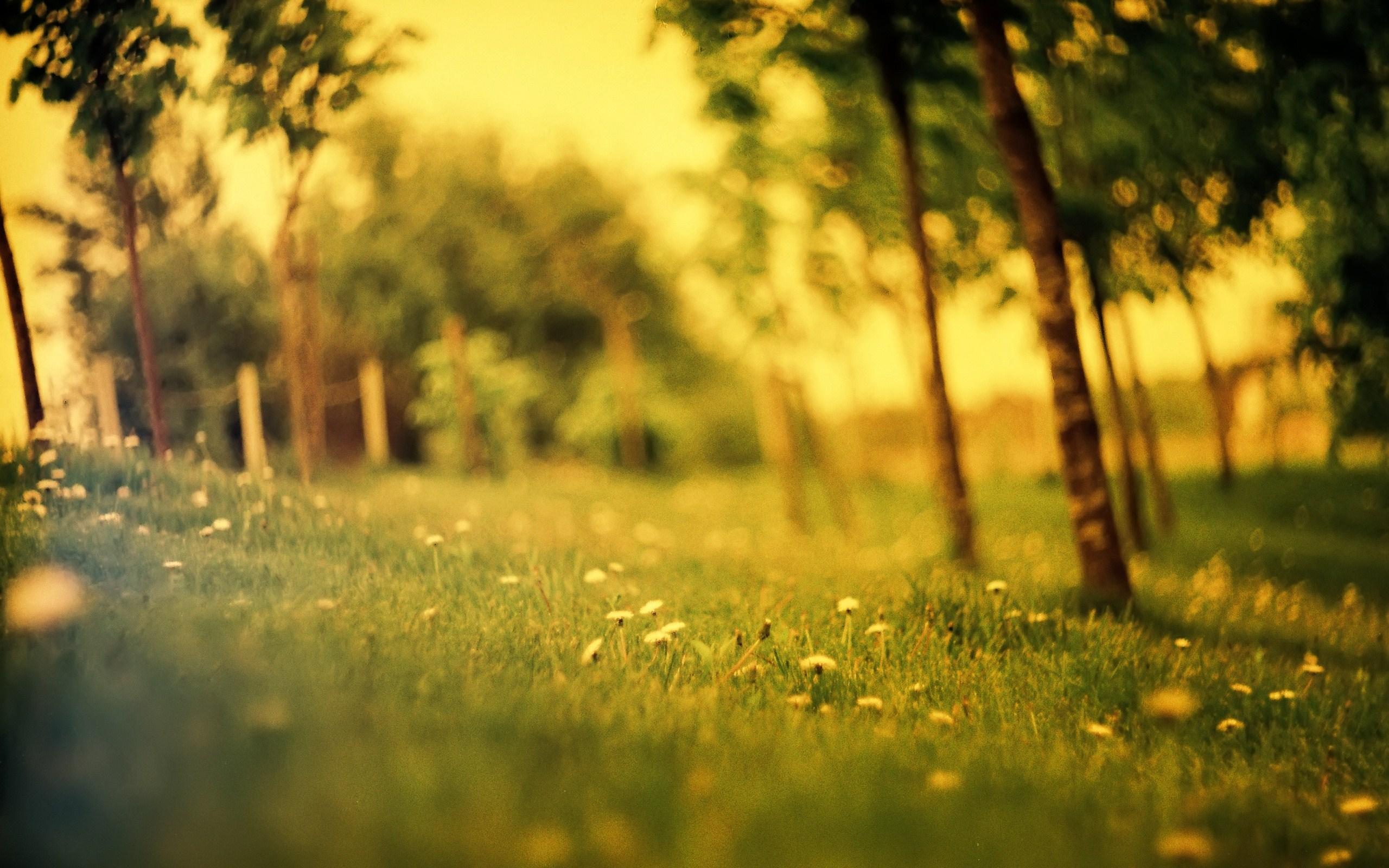 Grass Field Summer Wallpaper 2560x1600