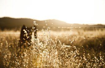 Grass Landscapes Sunset Sunrise Wallpaper 1920x1200 340x220