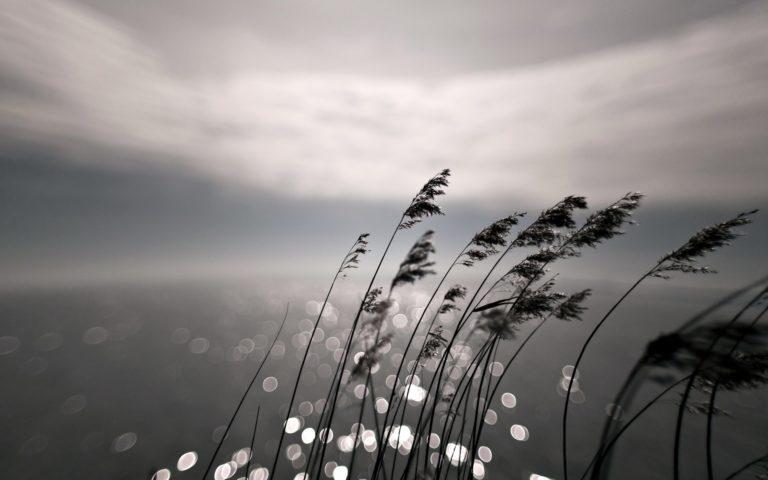 Grass Night Nature Bokeh Sea Wallpaper 1920x1200 768x480