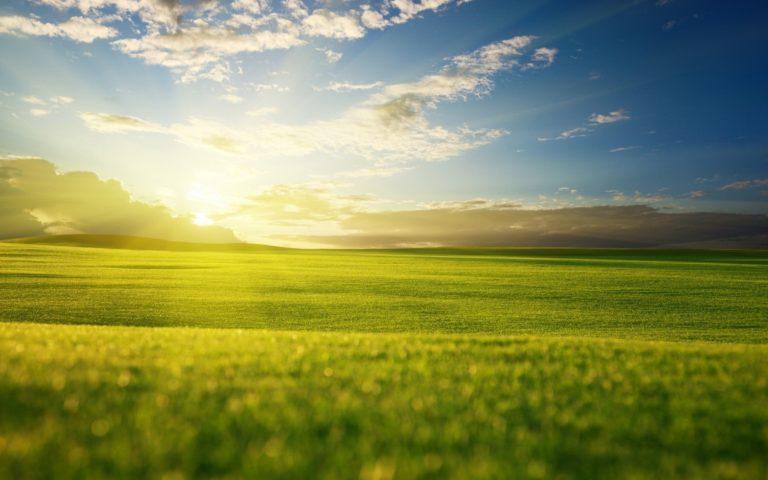 Grass Sky Light Wallpaper 1920x1200 768x480
