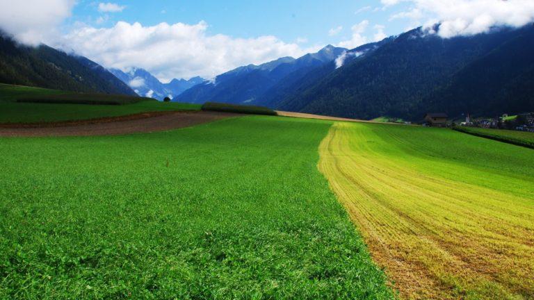 Grass Summer Field Wallpaper 2560x1440 768x432