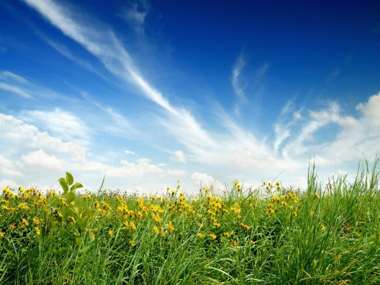 Green Blue Clouds Nature Flowers Wallpaper 2560x1920 768x576