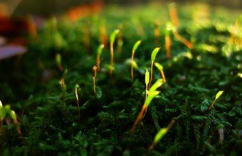 Green Close Up Nature Grass Wallpaper 1920x1200 340x220