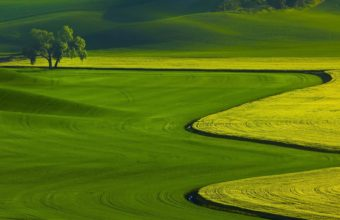 Green Fields Nature Landscape Wallpaper 1920x1080 340x220